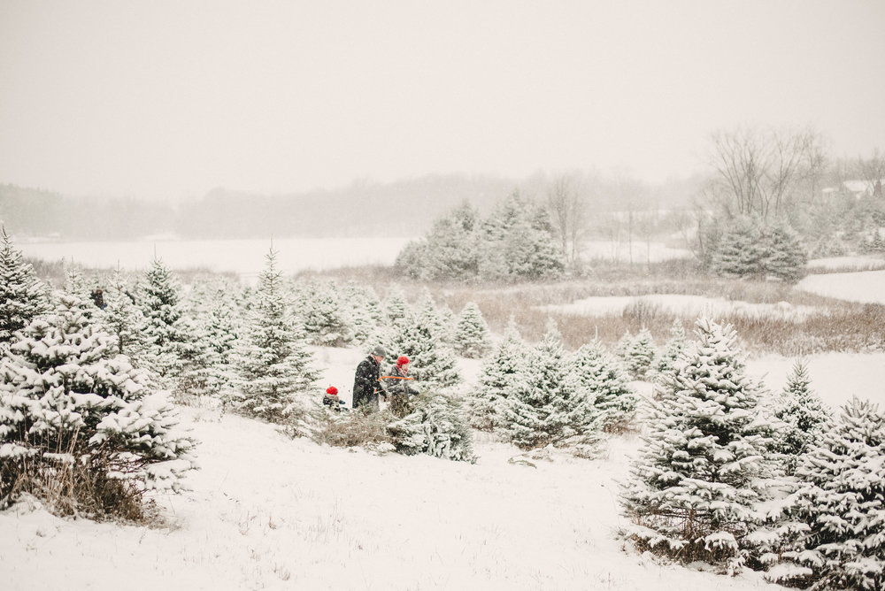 Christmas Tree Farm Family Photo Session Metamora Michigan Winter (16).JPG