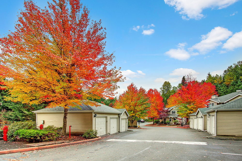garage trees.jpg