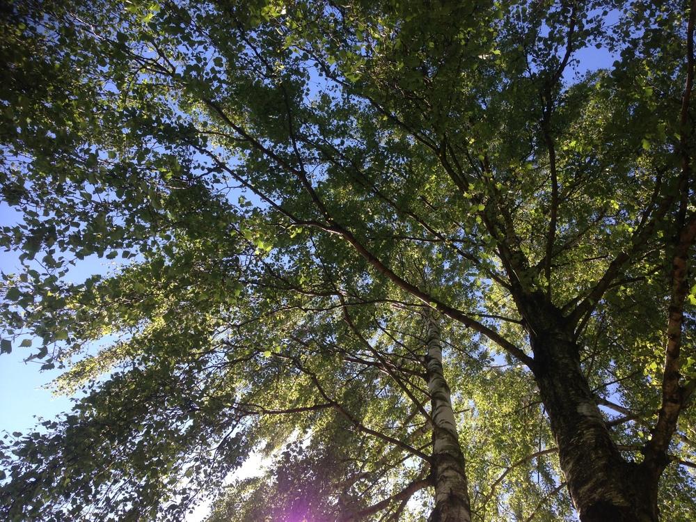 Ligga under ett träd och se löven vaja i vinden.
