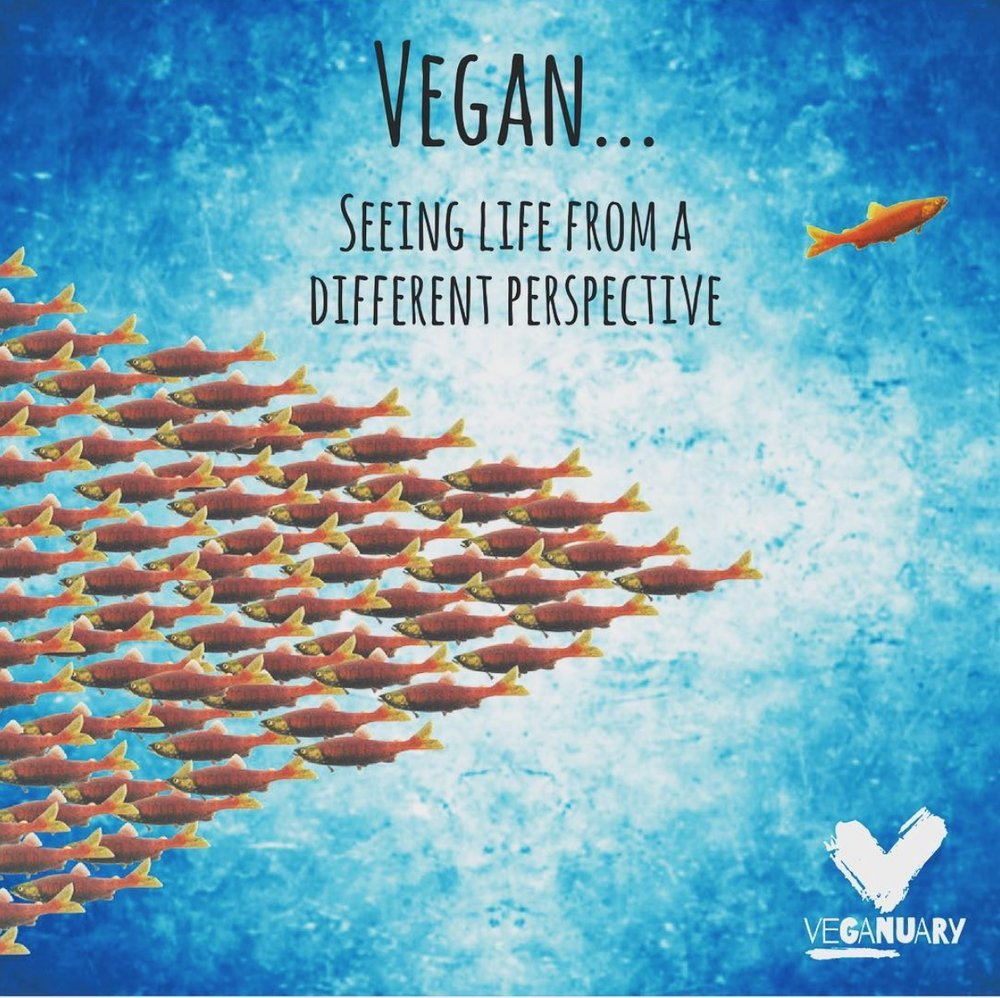 vegan different perspective.jpeg