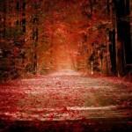 leaves-150x150.jpg