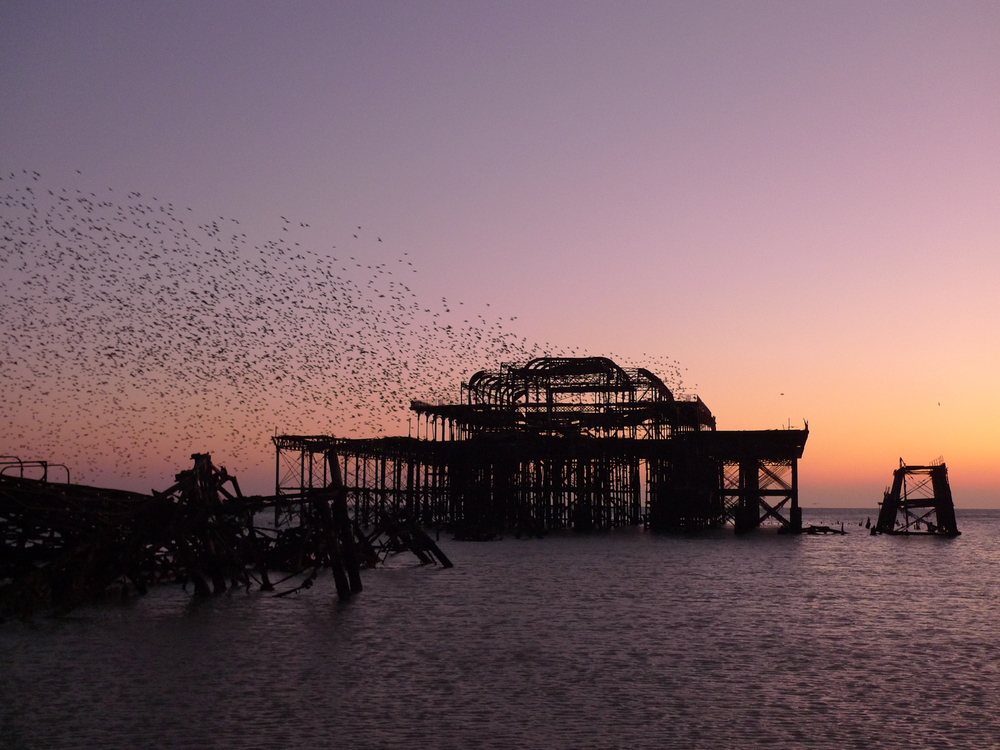 The amazing starling murmuration over the old pier in Brighton
