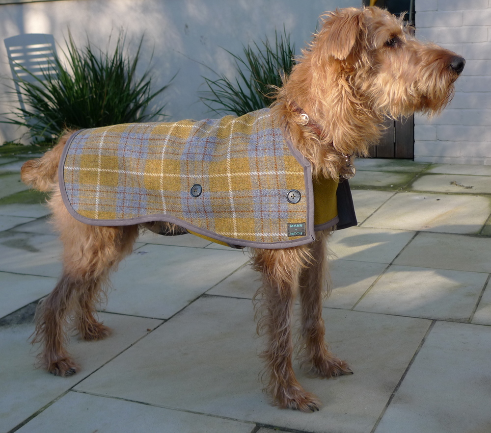 Seamus' perfect posture in his Harris Tweed 2-strap design dog coat