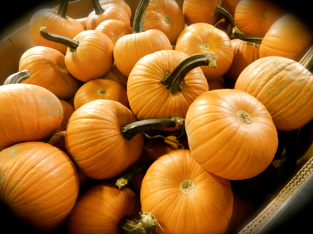 We roast a batch of fresh Pumpkins every year for Pumpkin Gelato. 4 Litre pails available now.