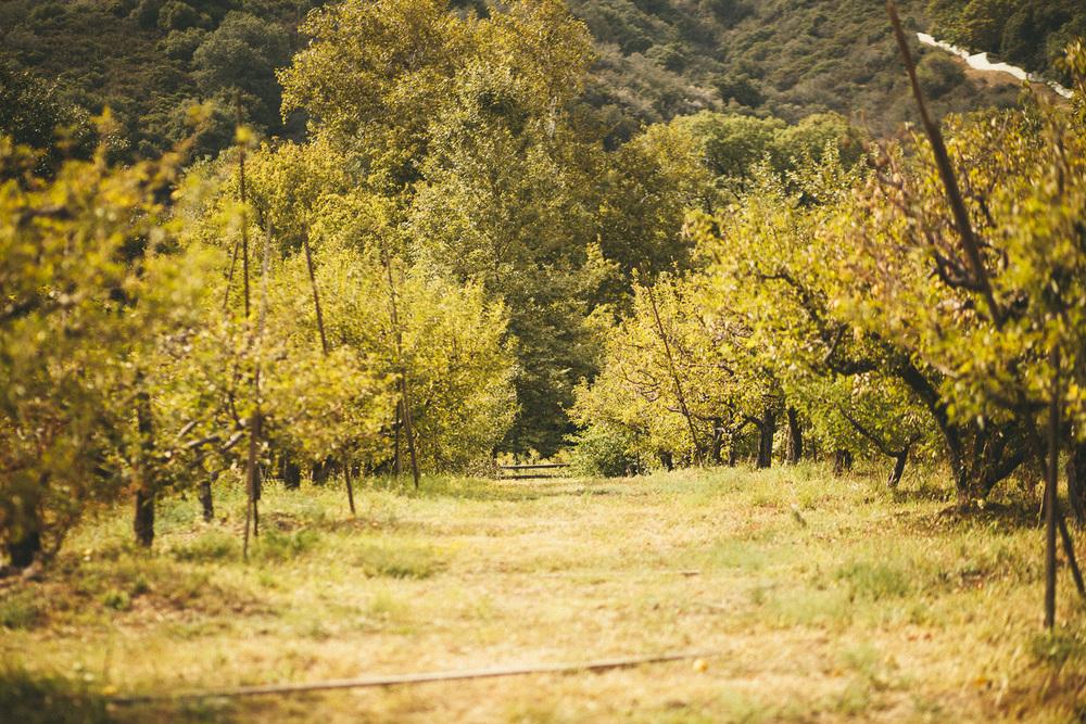 Fun in an apple orchard
