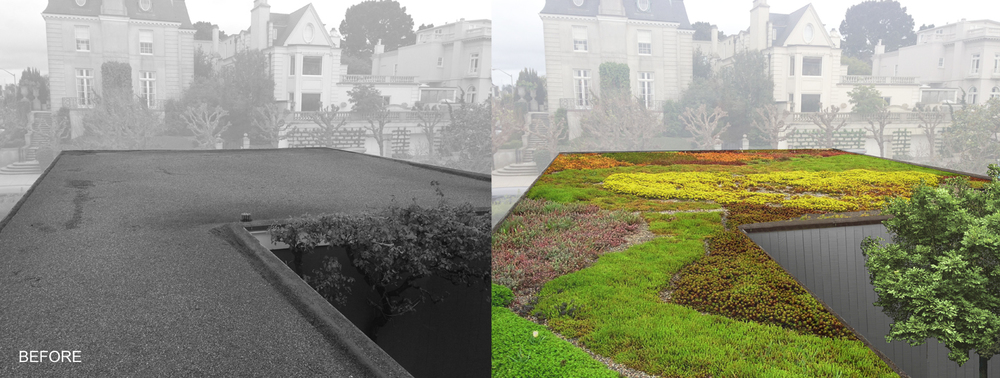 2014.08.21_Green Roof Before & After.jpg