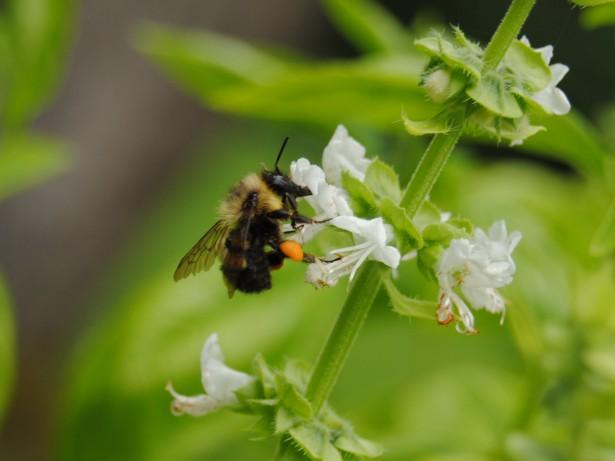solutions providing for pollinators making mason bee houses
