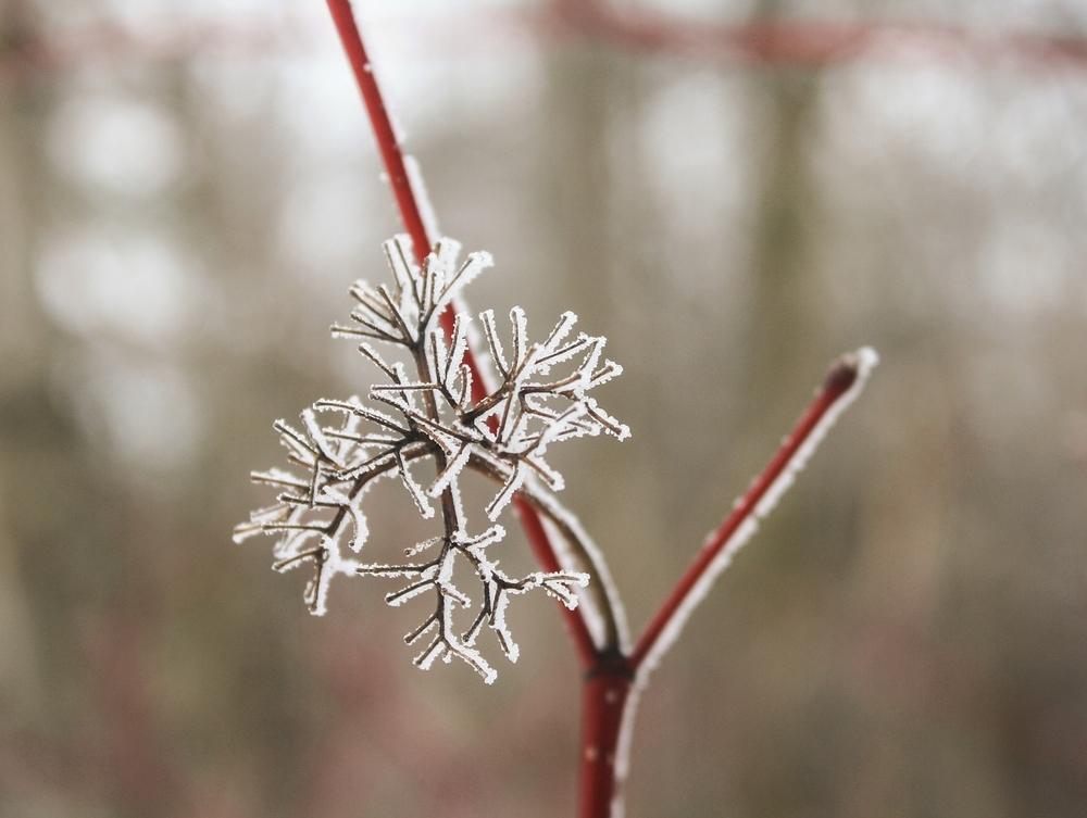 snowflake-633243_1920.jpg