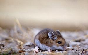 Mischievous Mice