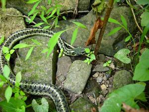 Scintillating Snakes