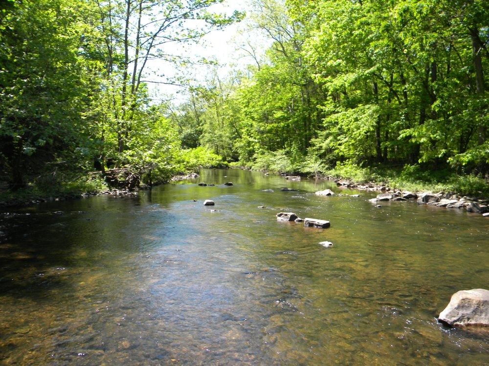 Perkiomen Creek (G. Halus) - 15.JPG