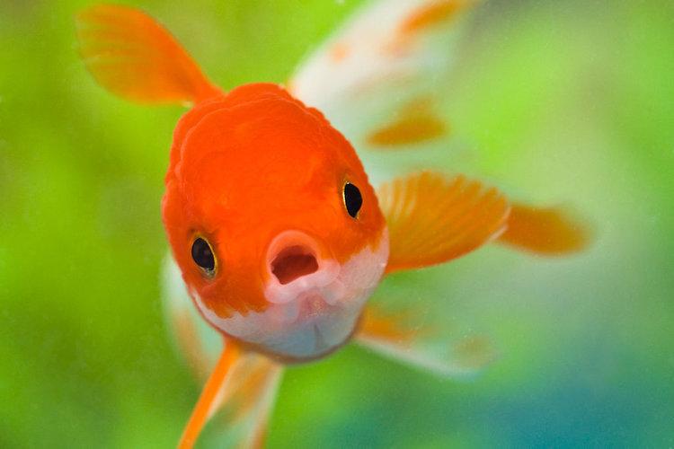 1024px-NEW_FISH!!!_2_(4694899147).jpg