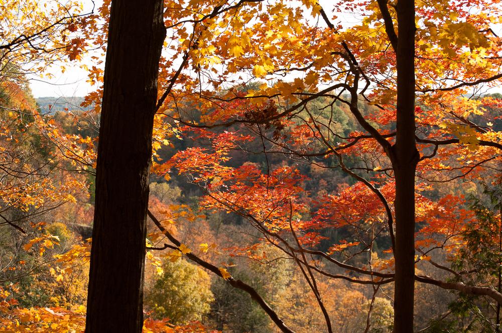 Dundas Peak - Marek Michalek Photography-2.jpg