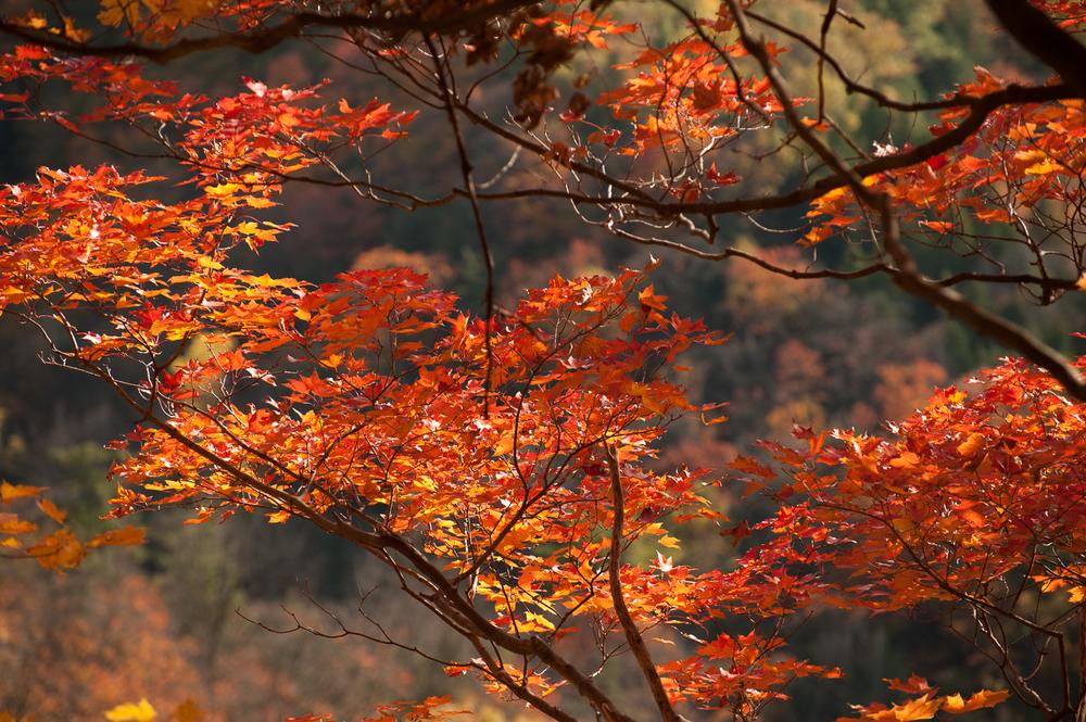 Dundas Peak - Marek Michalek Photography-3.jpg