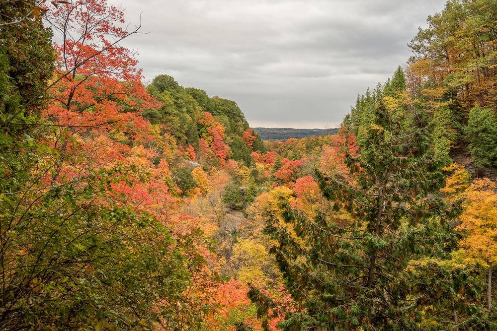 Dundas Peak - Hamilton Photography Locations-3.jpg