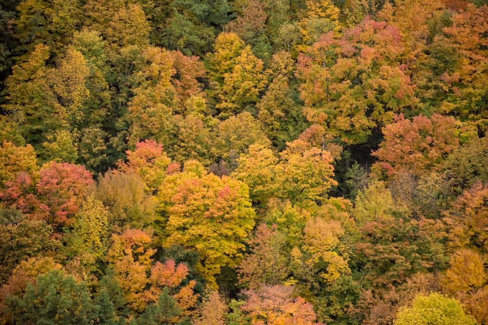 Dundas Peak - Hamilton Photography Locations-5.jpg