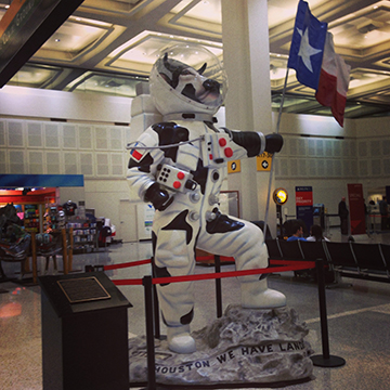 Statue in the George Bush Intercontinental Airport in Houston, Texas.  Home of cattle, astronauts, and apparently cattle astronauts!