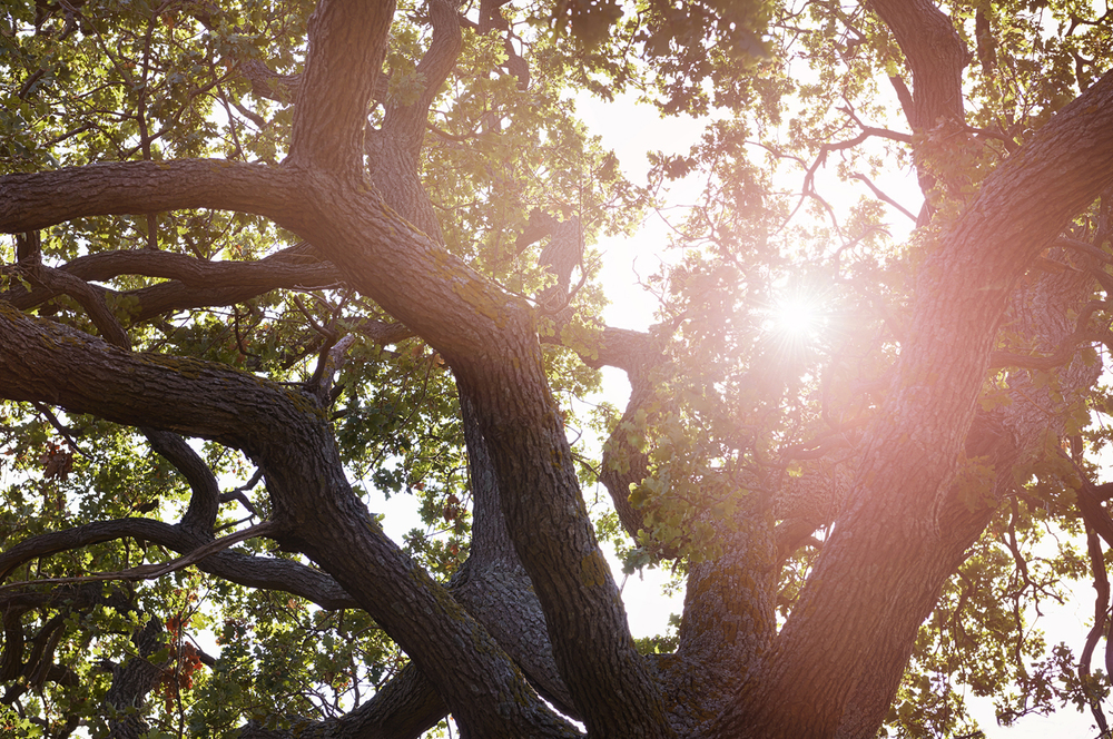 11_SIsland_Trees.jpg