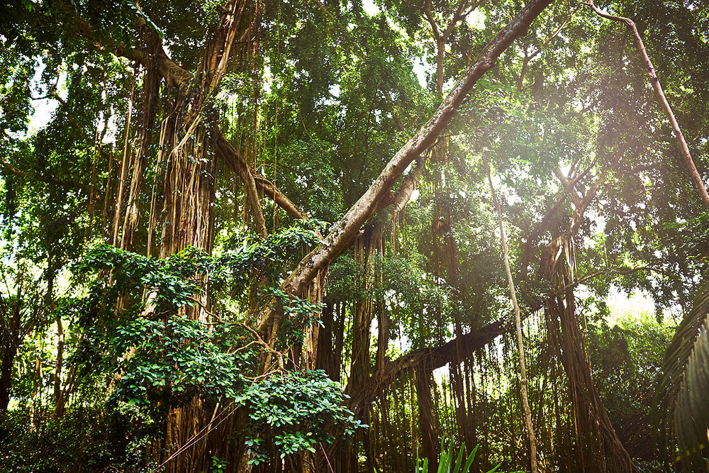 161110_Bali_TreesForest2.jpg