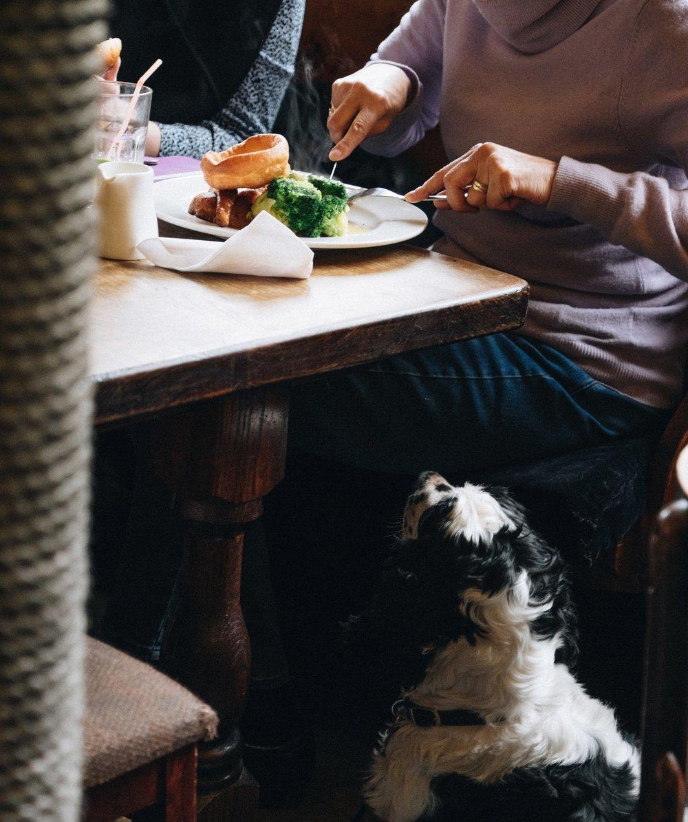 dog meal.jpg
