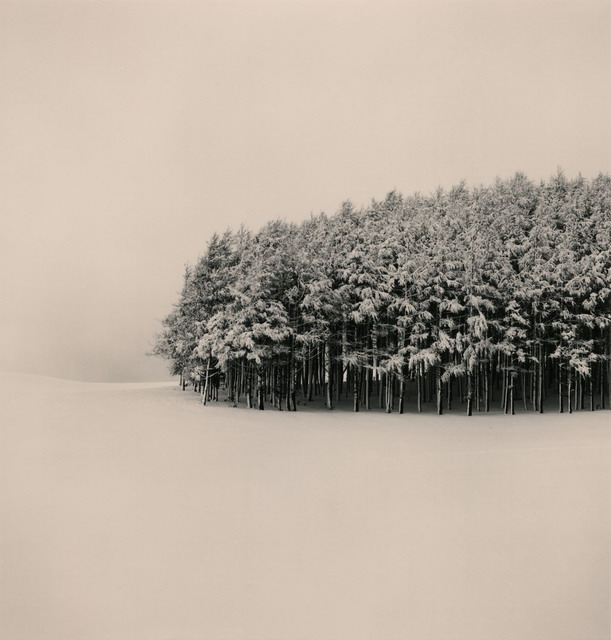 White Copse , 2004 Michael Kenna
