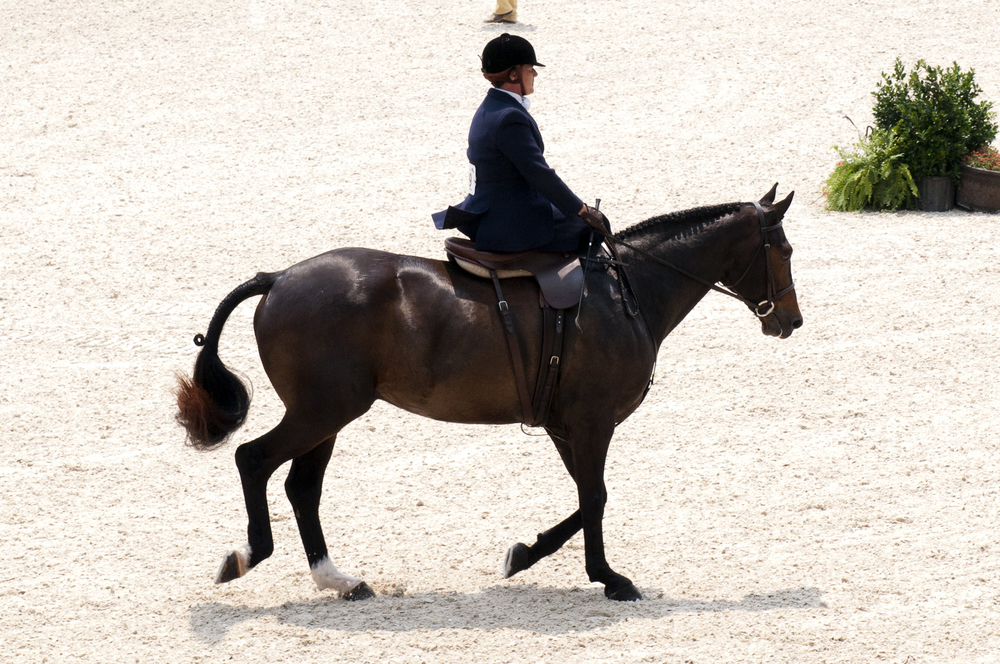 side-saddle-individual.jpg