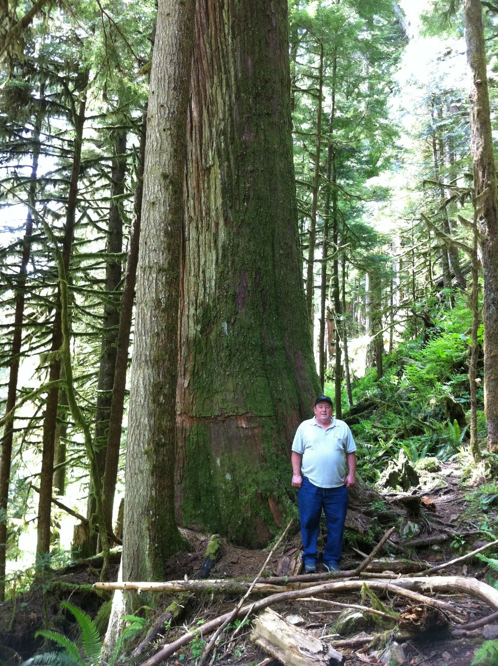 "On that same hike, my dad spotted this huge tree, and I insisted that he get his picture taken with it. He said, ""the guys back home won't believe this."" That's why I promoted to take the photo. My father grew up as a logger, so almost the entire walk he would tell me how many pieces of lumber he could get out of a single tree."