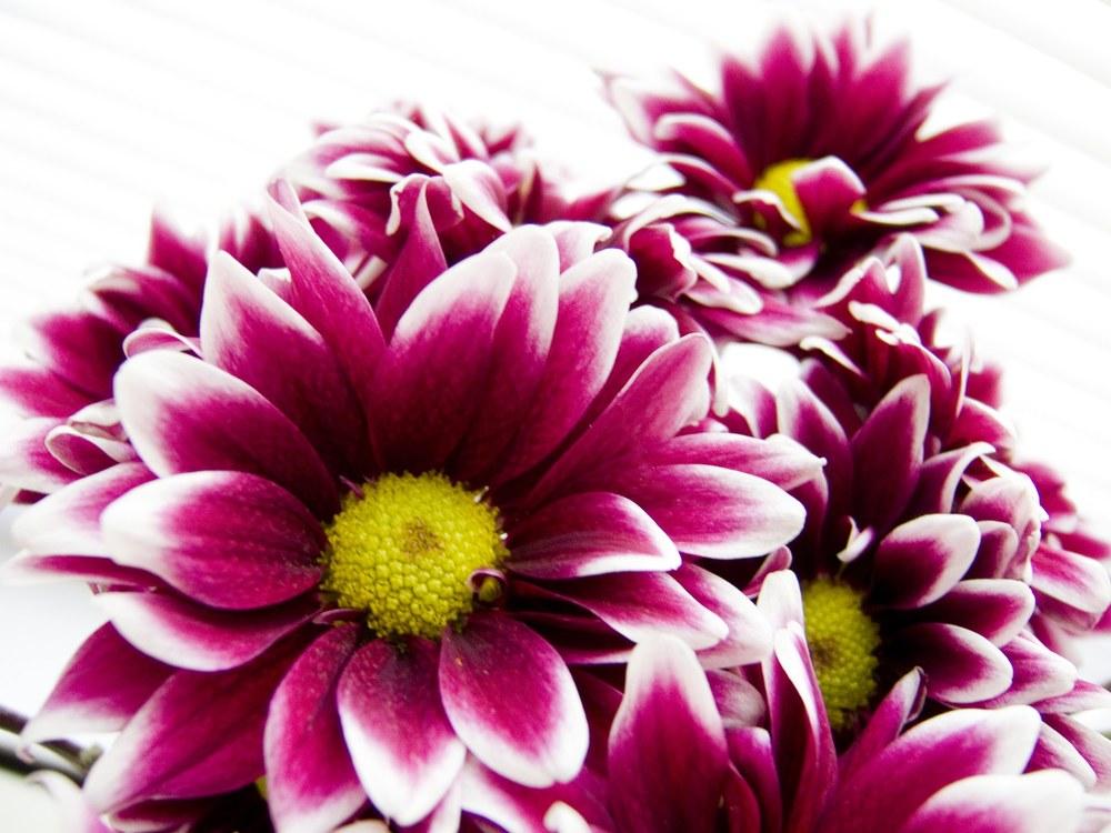 Flowers_05.jpg
