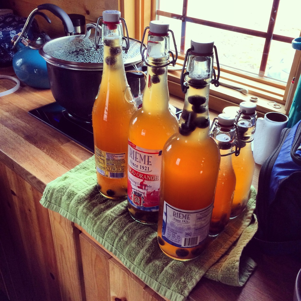 The Kombucha will sit out for a few days to get nice and bubbly, then we move it to the fridge for a few more days… then enjoy!