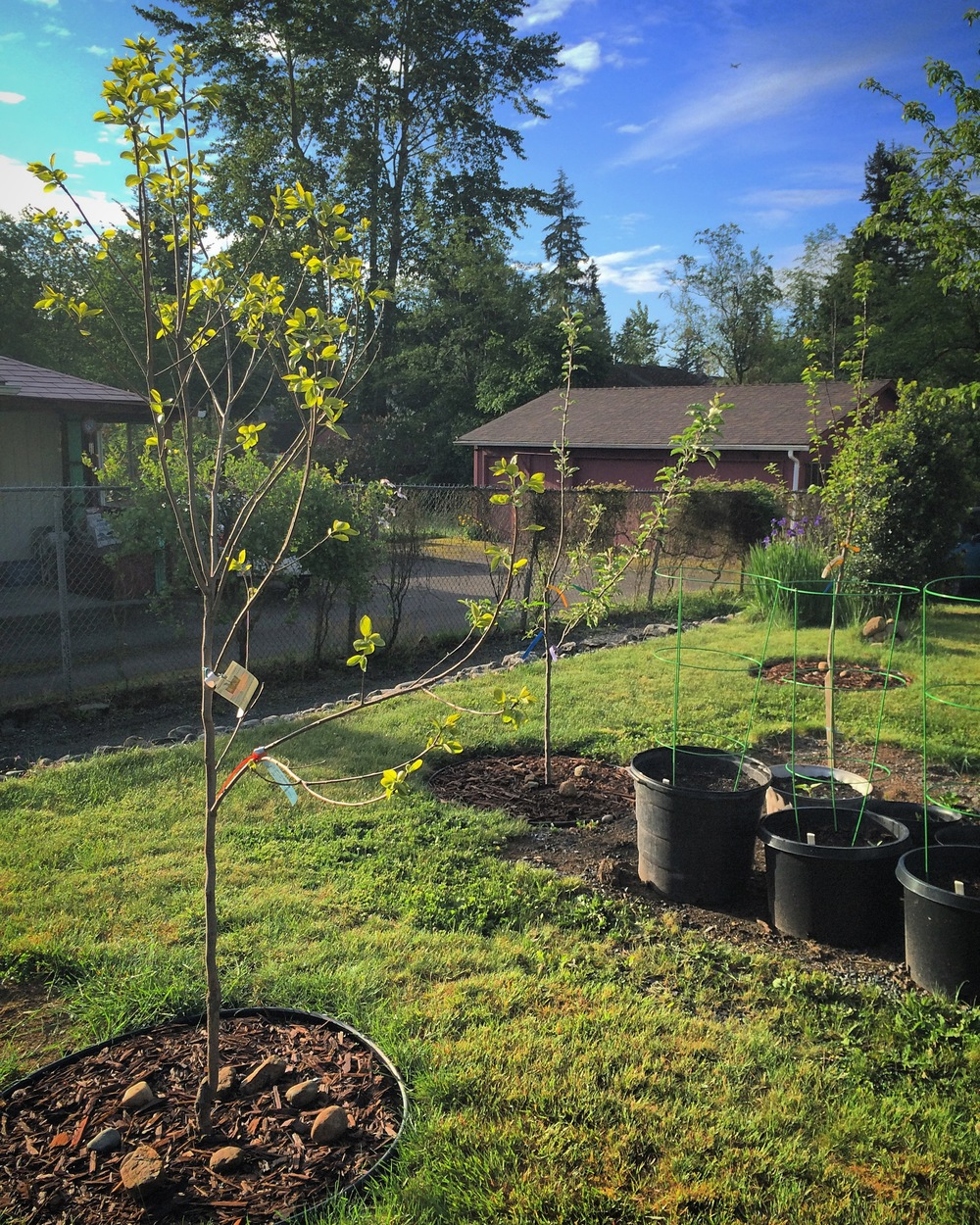 A few of the new Fruit Trees.