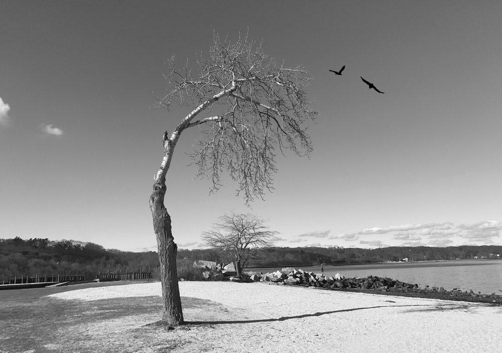 My Sad Tree - iPhone 8+, Snapseed, Distressed FX
