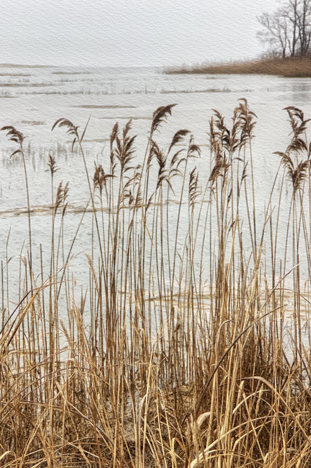 Phragmites - who knew? - iPhone XS, Snapseed, iColorama