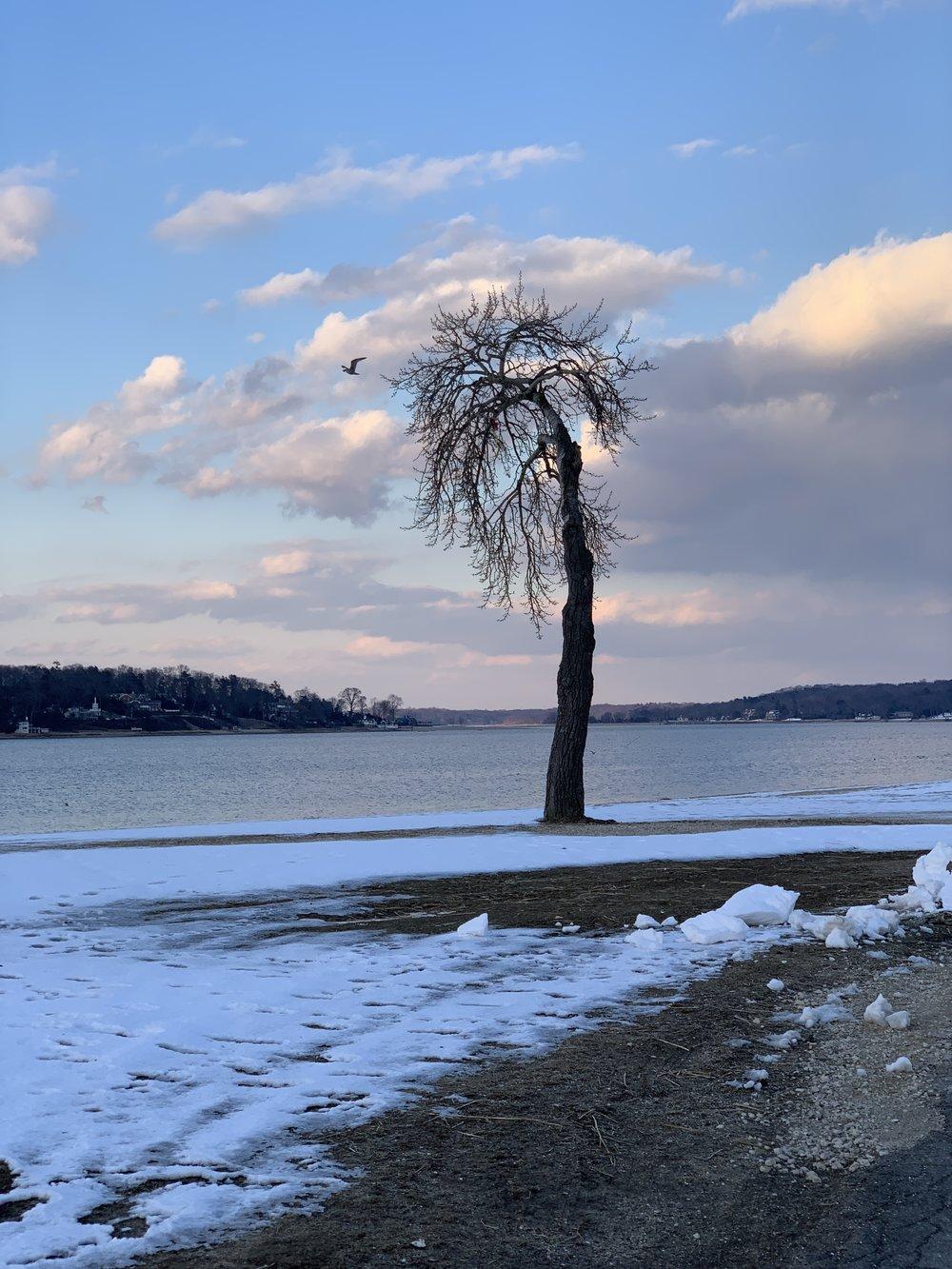 Sad Tree today -