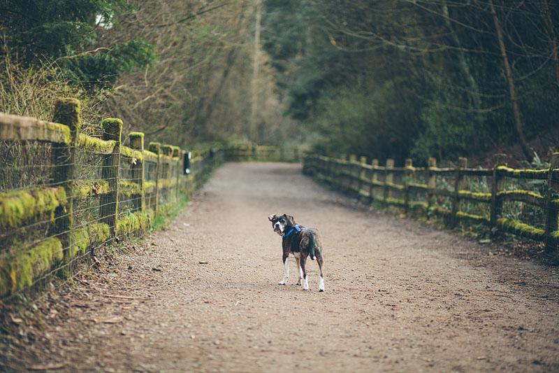 2013_03_04 Bona at dog park-34.jpg