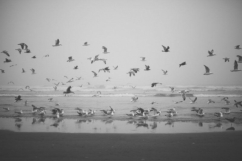 Ocean Shores photography