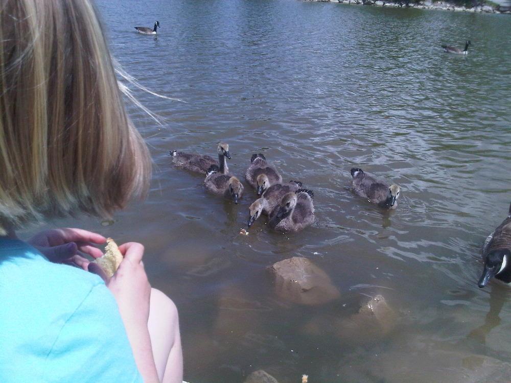 Mia_feeding_ducks