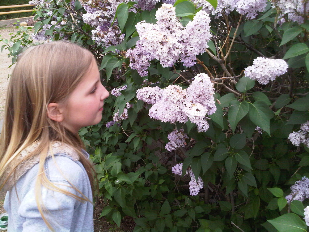 Olivia_smelling_lilac