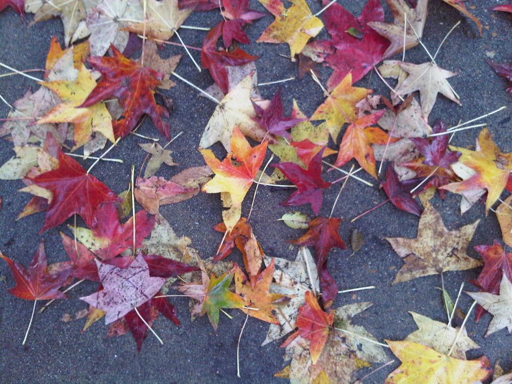 Leaves_on_sidewalk