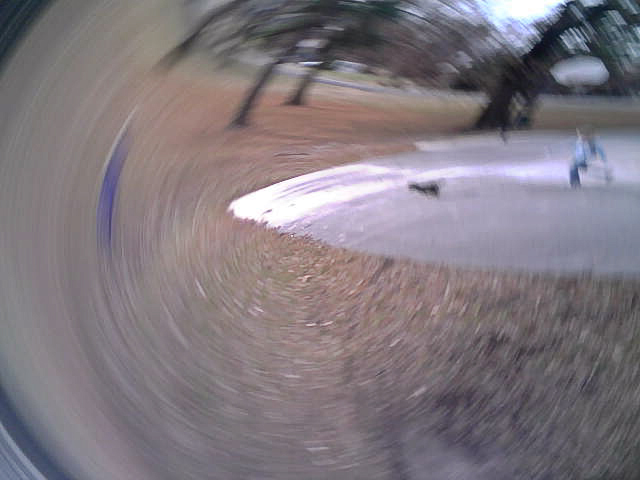 Blackberry flipping photo of dog and girl running in park