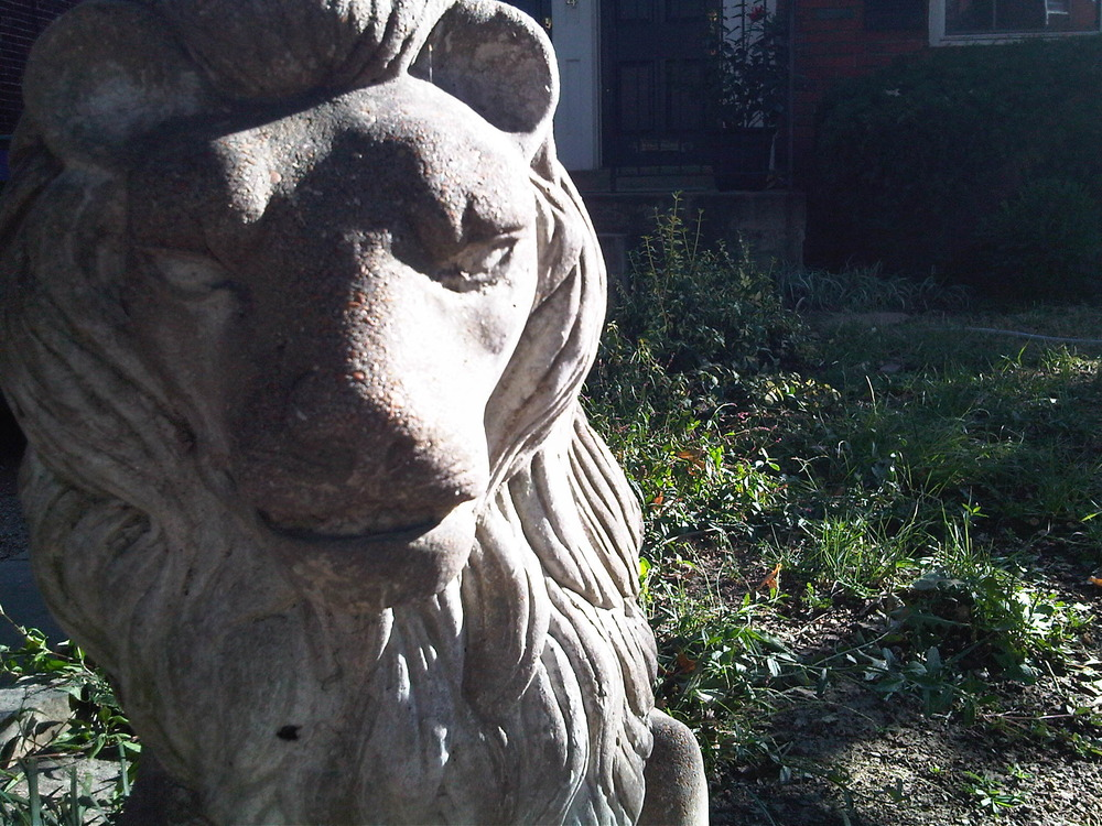 Lion-in-the-yard