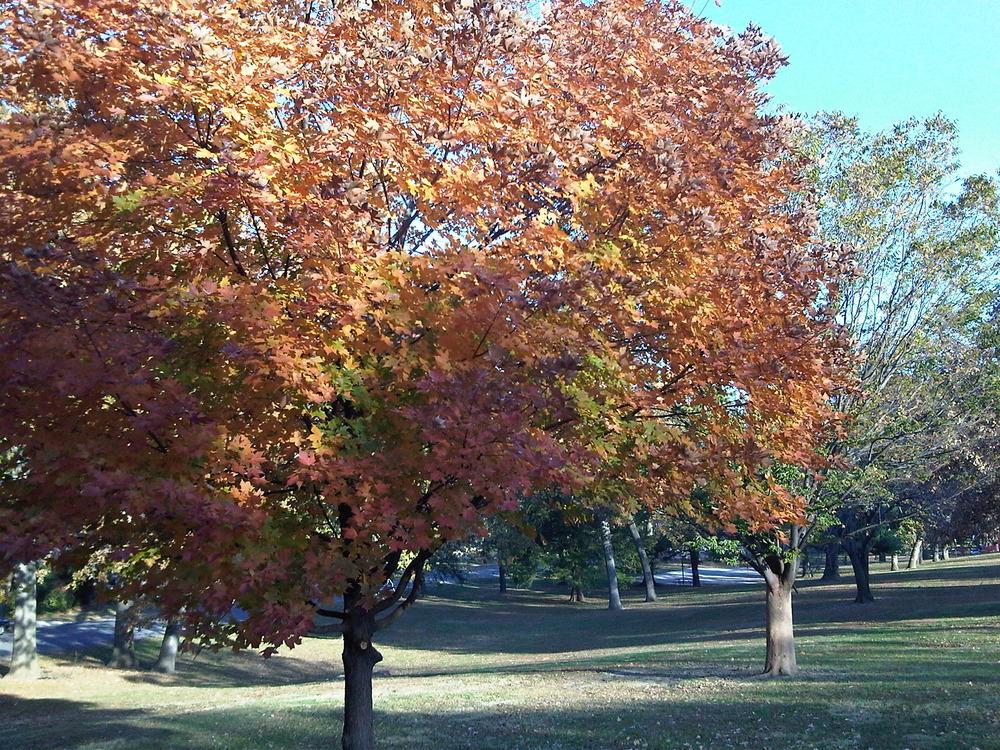 Prettty-tree