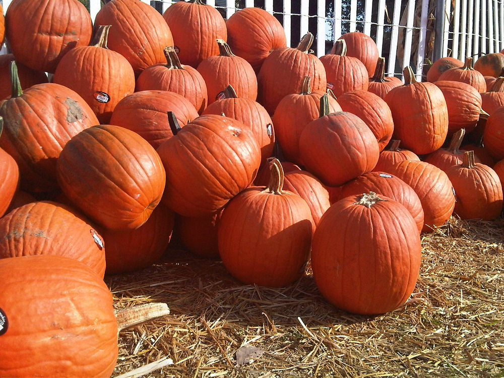 Pumpkin-farm