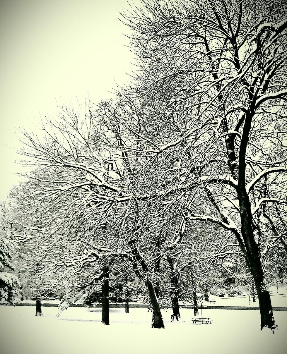 Snow-dog-walk-2