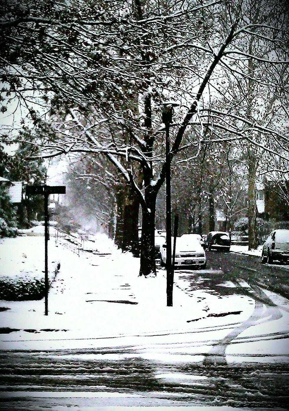 Snow-dog-walk-4