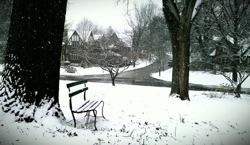 Snow-dog-walk-5