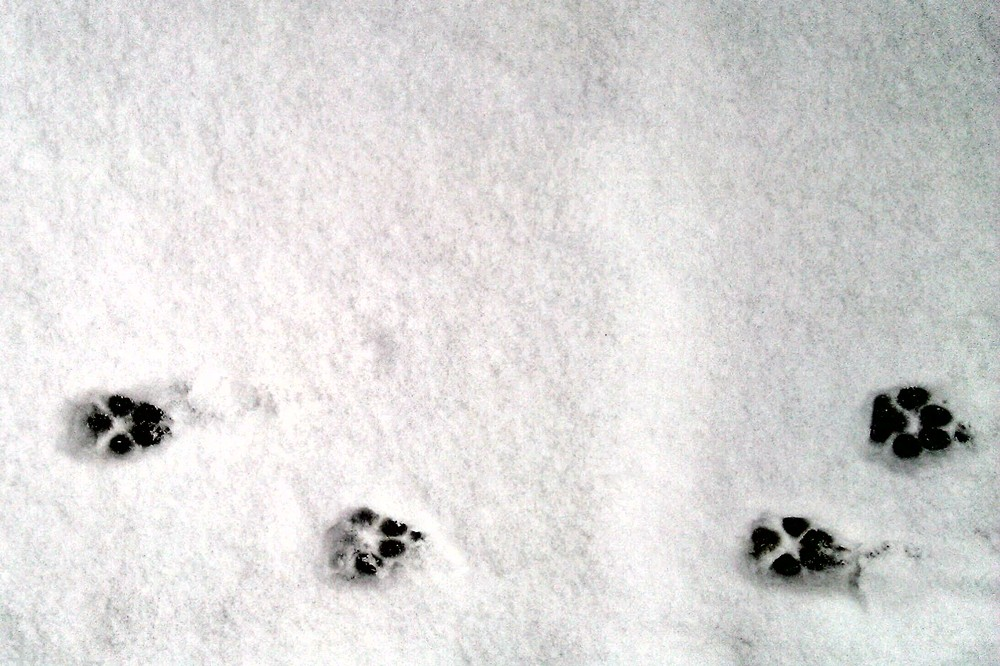 Snow-dog-walk-6