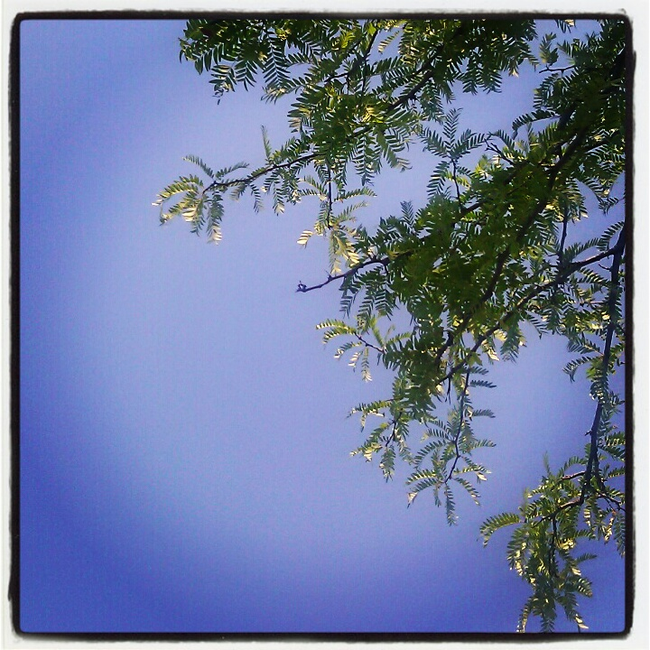 I'm glad to be directly under a tree to have some shade. It's hot in #STL!