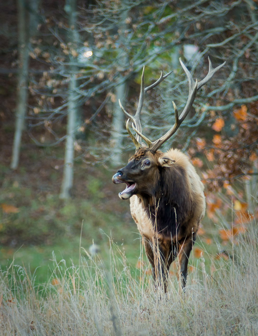 20131109-Lone Elk Park-PMG_2451.jpg