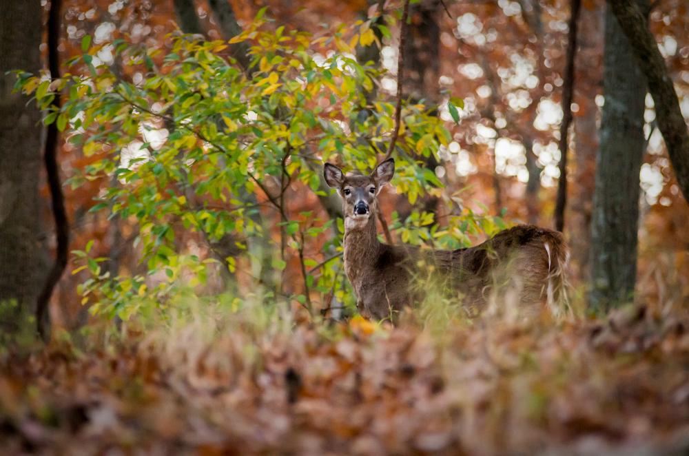 20131109-Lone Elk Park-PMG_2551.jpg