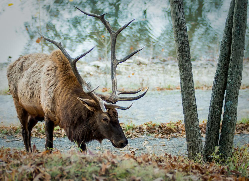 20131109-Lone Elk Park-PMG_2492.jpg